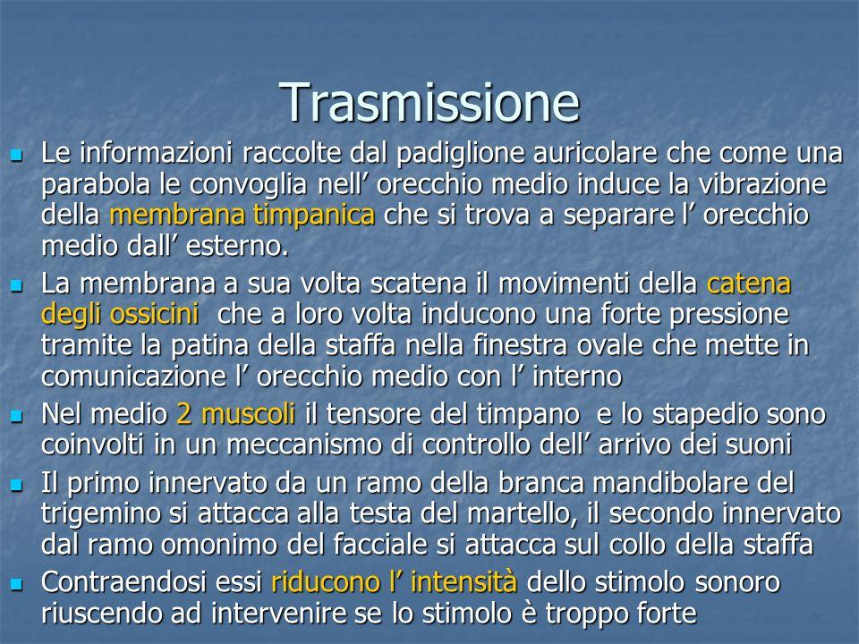 Trasmissione Le informazioni raccolte dal padiglione auricolare che come una parabola le convoglia nell orecchio medio induce la vibrazione della memb