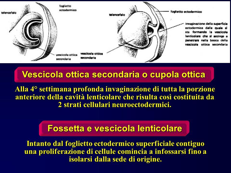 Sistema circolatorio linfatico