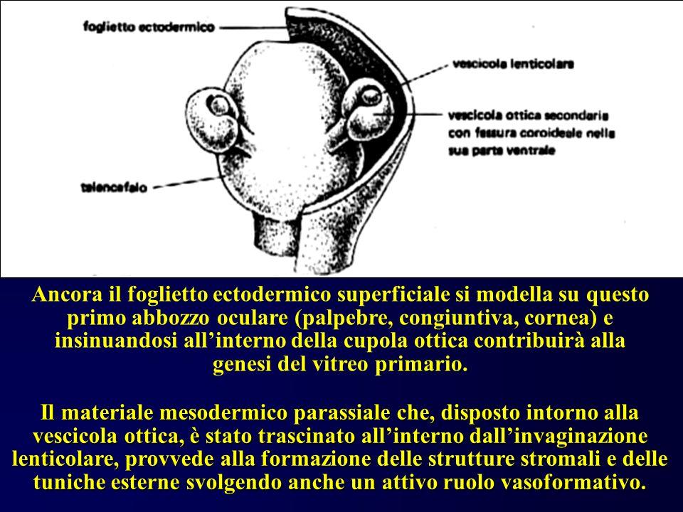 Strutture innervative Vie nervose afferenti Centri nervosi corticali Centri nervosi mesencefalici Vie nervose efferenti