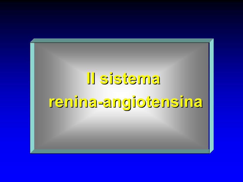 Il sistema renina-angiotensina Il sistema renina-angiotensina