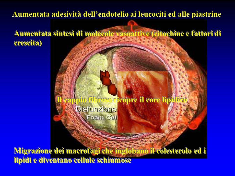 Disfunzione endoteliale Aumentata adesività dellendotelio ai leucociti ed alle piastrine Aumentata sintesi di molecole vasoattive (citochine e fattori di crescita) Migrazione dei macrofagi che inglobano il colesterolo ed i lipidi e diventano cellule schiumose Il cappio fibroso ricopre il core lipidico