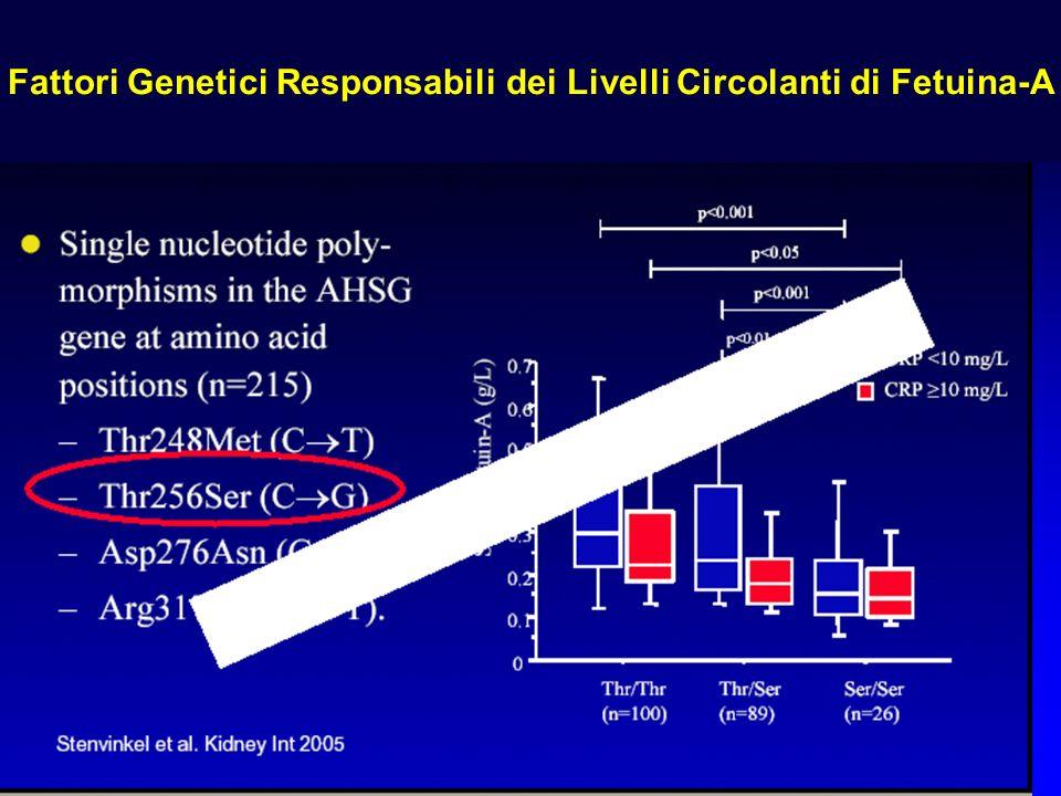 Fattori Genetici Responsabili dei Livelli Circolanti di Fetuina-A