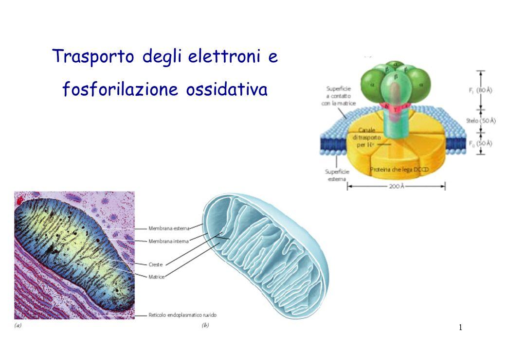 1 Trasporto degli elettroni e fosforilazione ossidativa