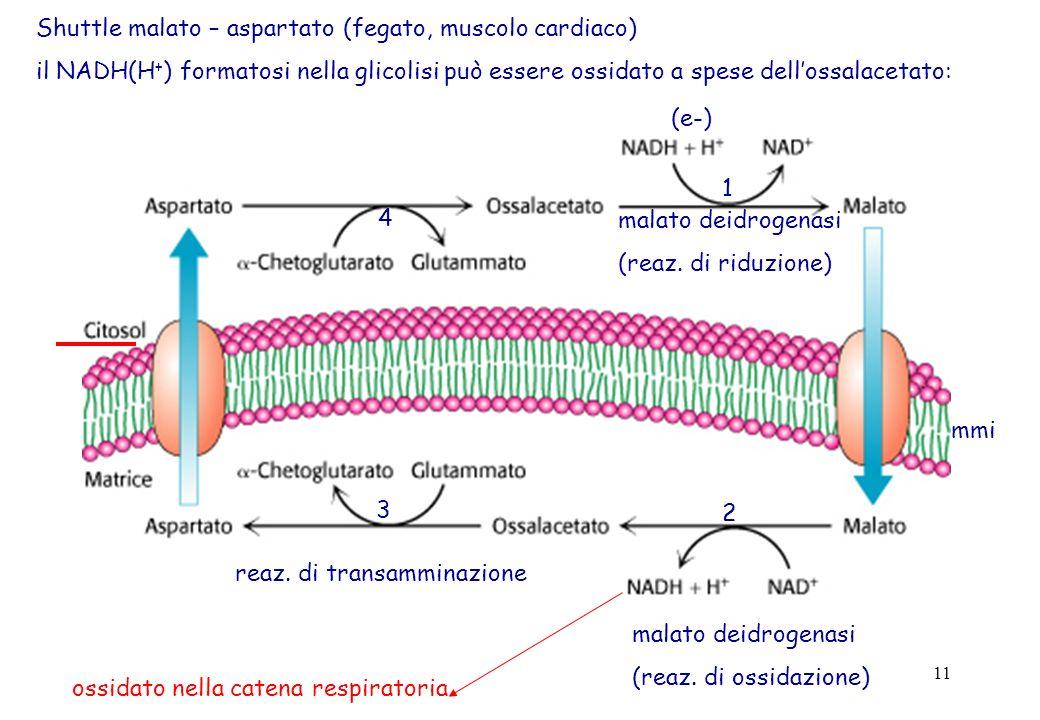 11 Shuttle malato – aspartato (fegato, muscolo cardiaco) il NADH(H + ) formatosi nella glicolisi può essere ossidato a spese dellossalacetato: (e-) 1