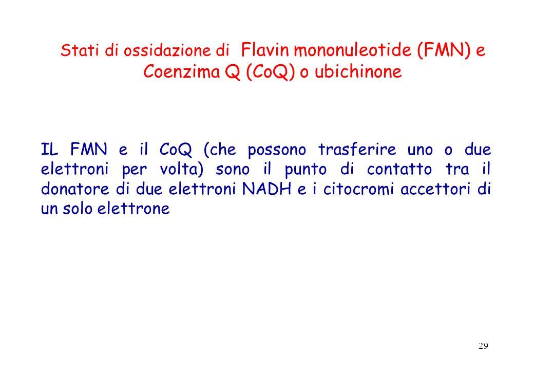 29 Stati di ossidazione di Flavin mononuleotide (FMN) e Coenzima Q (CoQ) o ubichinone IL FMN e il CoQ (che possono trasferire uno o due elettroni per