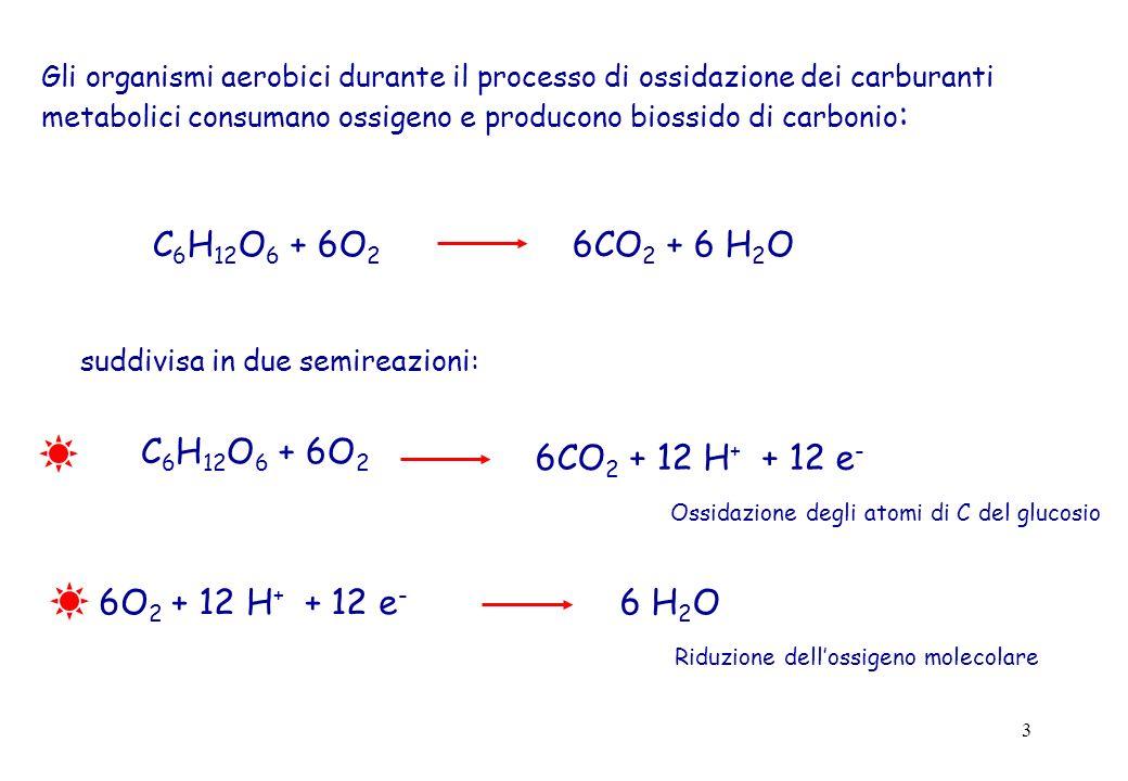 14 La catena respiratoria libera energia grazie alla differenza dei potenziali di riduzione tra il donatore (NADH + H + ) e laccettore (O 2 ) di elettroni.