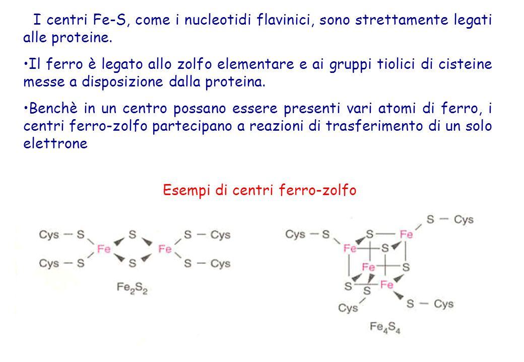 31 I centri Fe-S, come i nucleotidi flavinici, sono strettamente legati alle proteine. Il ferro è legato allo zolfo elementare e ai gruppi tiolici di