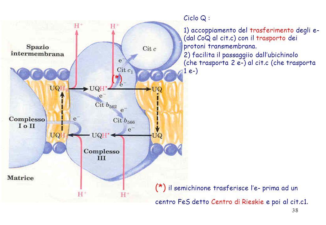 38 Ciclo Q : 1) accoppiamento del trasferimento degli e- (dal CoQ al cit.c) con il trasporto dei protoni transmembrana. 2) facilita il passaggiio dall