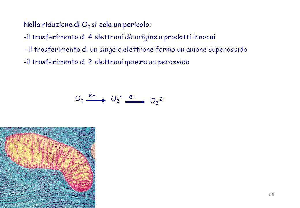60 Nella riduzione di O 2 si cela un pericolo: -il trasferimento di 4 elettroni dà origine a prodotti innocui - il trasferimento di un singolo elettro