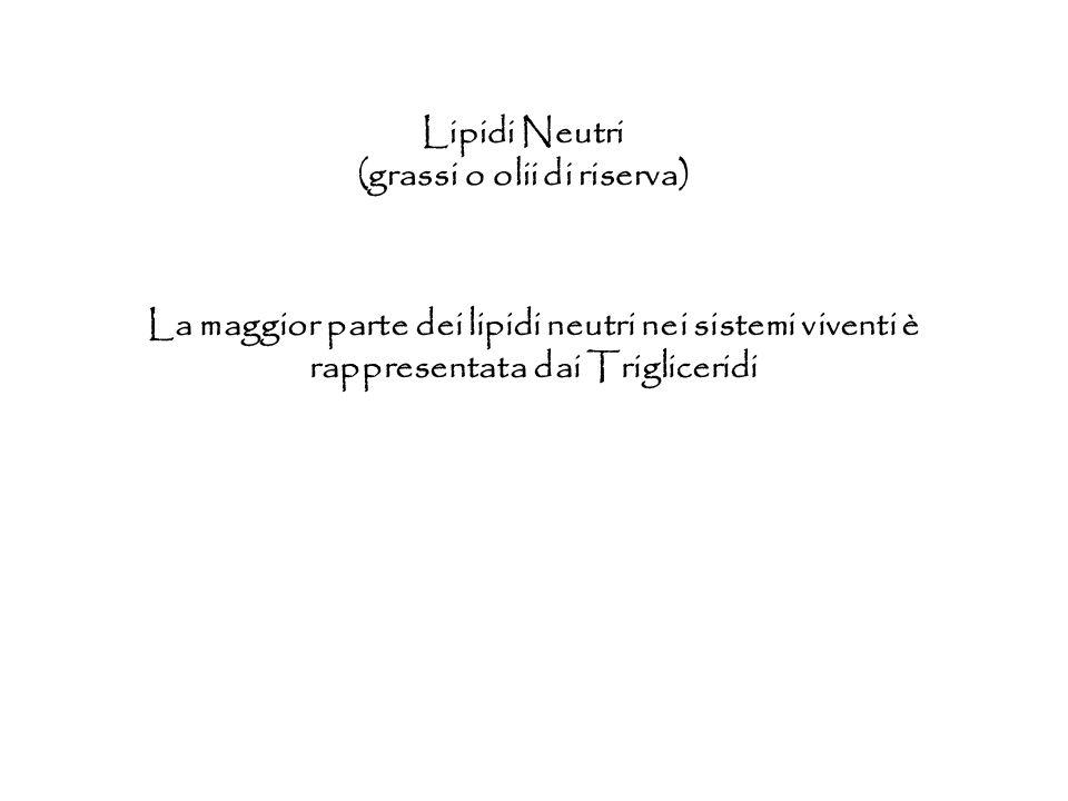 Lipidi Neutri (grassi o olii di riserva) La maggior parte dei lipidi neutri nei sistemi viventi è rappresentata dai Trigliceridi