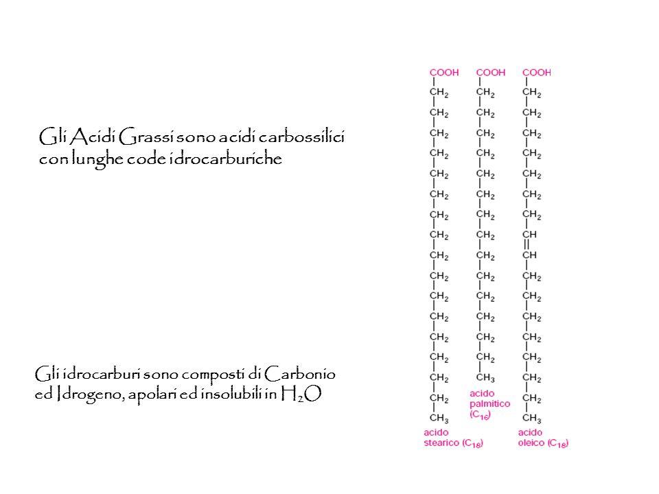 Gli Acidi Grassi sono acidi carbossilici con lunghe code idrocarburiche Gli idrocarburi sono composti di Carbonio ed Idrogeno, apolari ed insolubili i