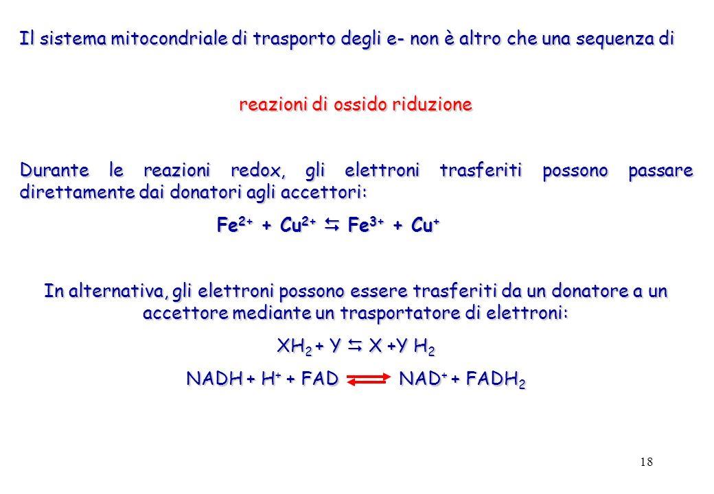 18 Il sistema mitocondriale di trasporto degli e- non è altro che una sequenza di reazioni di ossido riduzione Durante le reazioni redox, gli elettroni trasferiti possono passare direttamente dai donatori agli accettori: Fe 2+ + Cu 2+ Fe 3+ + Cu + In alternativa, gli elettroni possono essere trasferiti da un donatore a un accettore mediante un trasportatore di elettroni: XH 2 + Y X +Y H 2 NADH + H + + FAD NAD + + FADH 2