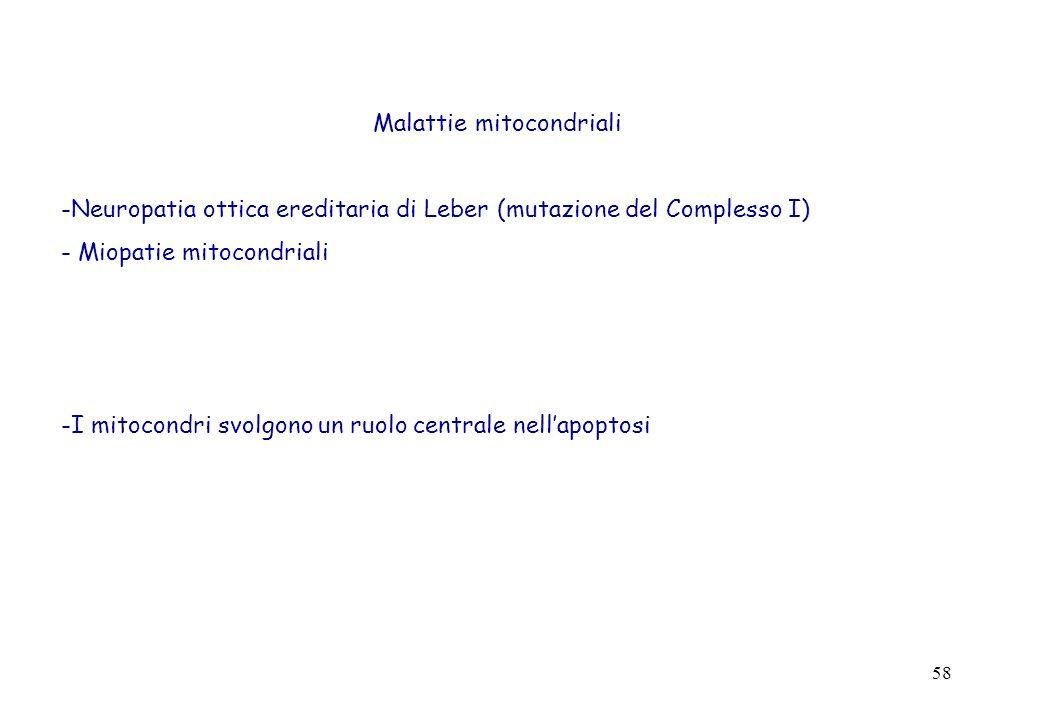 58 Malattie mitocondriali -Neuropatia ottica ereditaria di Leber (mutazione del Complesso I) - Miopatie mitocondriali -I mitocondri svolgono un ruolo centrale nellapoptosi