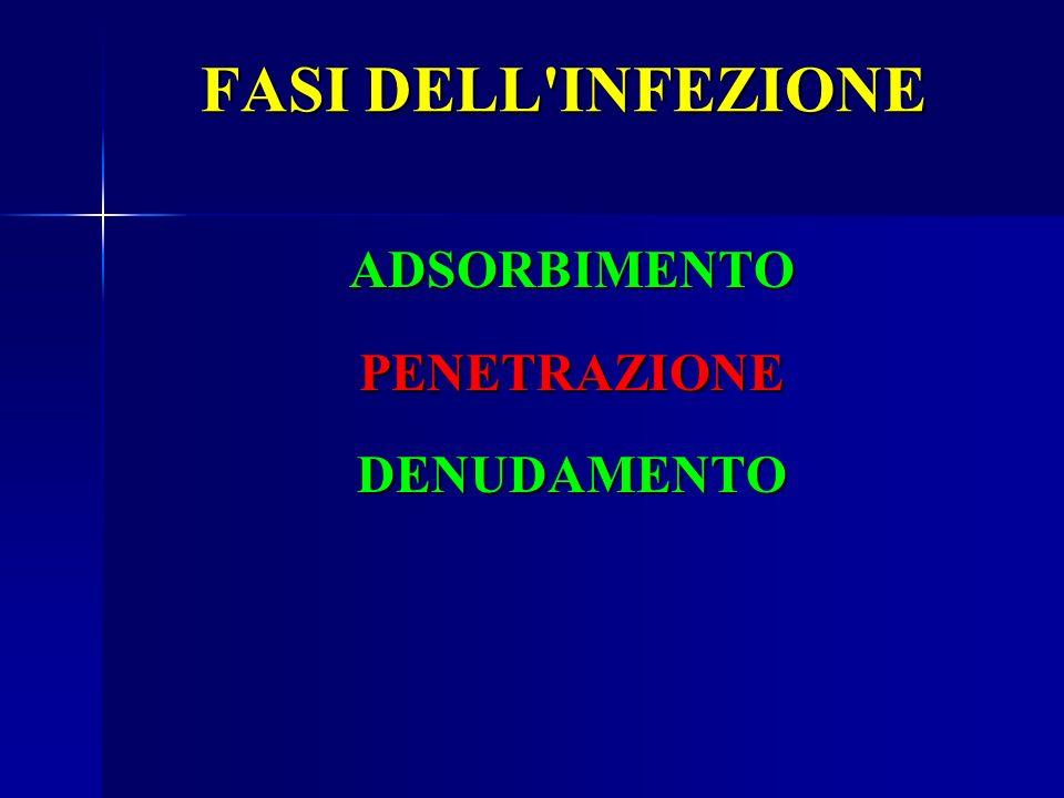 FASI DELL'INFEZIONE ADSORBIMENTOPENETRAZIONEDENUDAMENTO