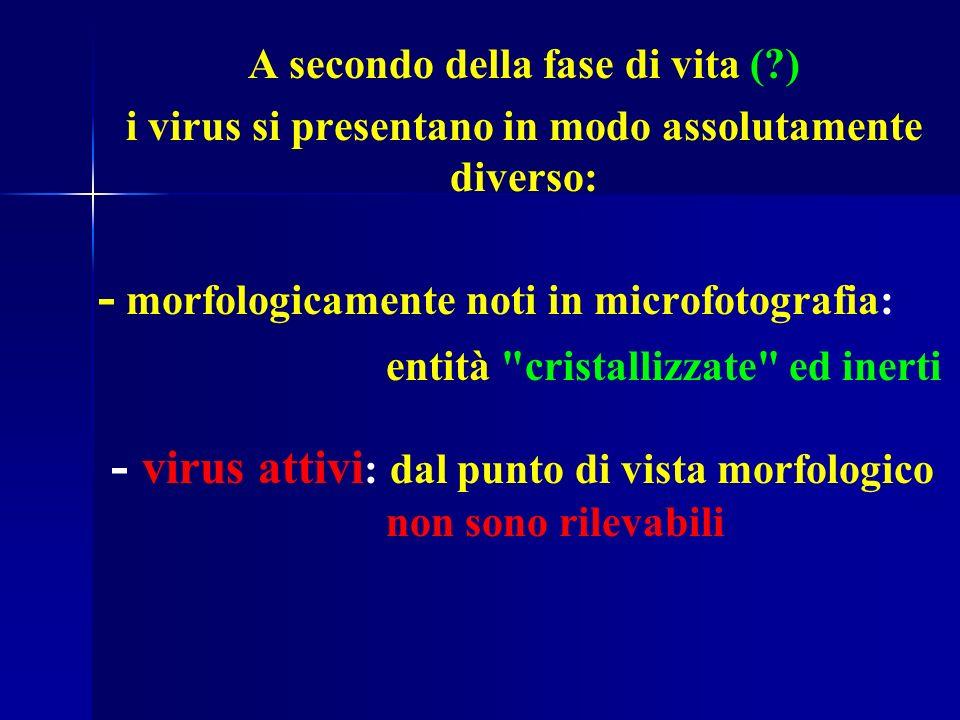 A secondo della fase di vita (?) i virus si presentano in modo assolutamente diverso: - morfologicamente noti in microfotografia: entità cristallizzate ed inerti - virus attivi : dal punto di vista morfologico non sono rilevabili