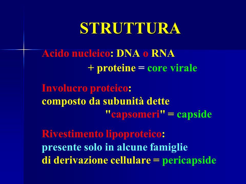 STRUTTURA Acido nucleico: DNA o RNA + proteine = core virale Involucro proteico: composto da subunità dette capsomeri = capside Rivestimento lipoproteico: presente solo in alcune famiglie di derivazione cellulare = pericapside