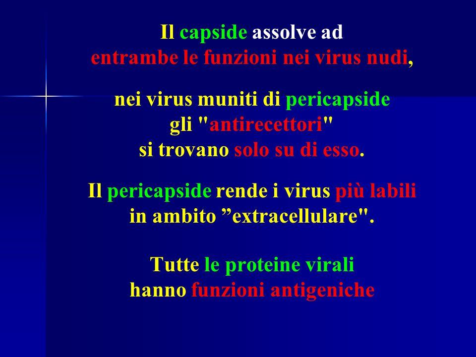 Il capside assolve ad entrambe le funzioni nei virus nudi, nei virus muniti di pericapside gli antirecettori si trovano solo su di esso.