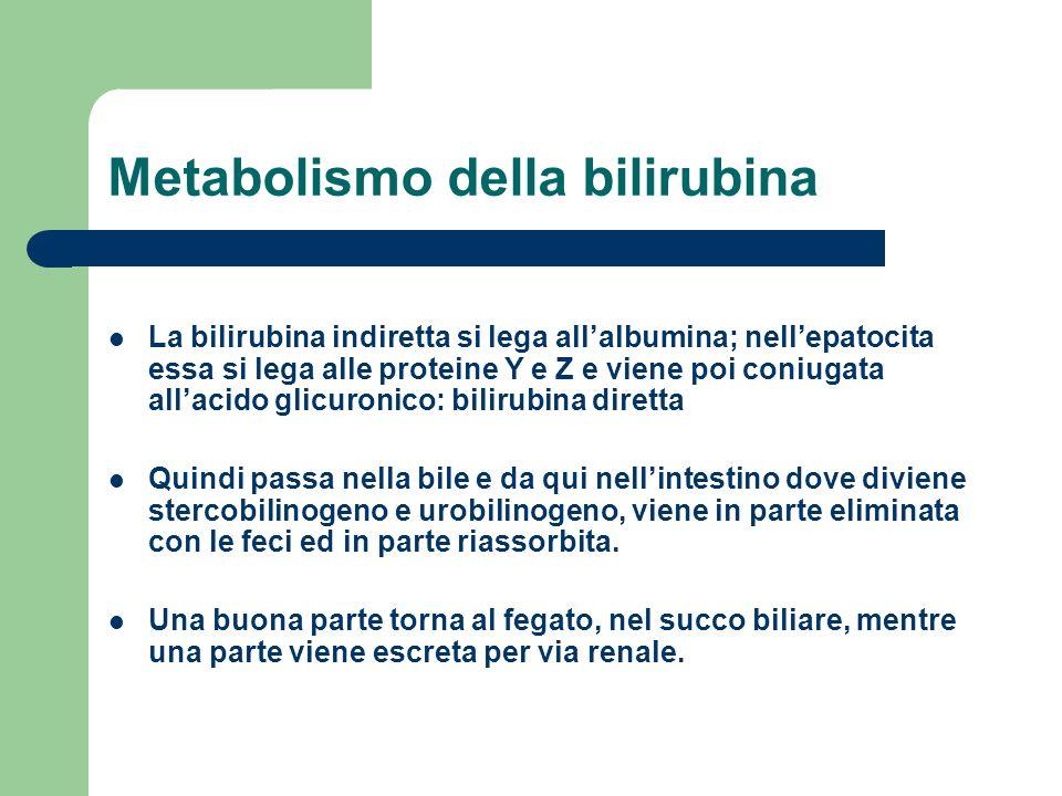 Metabolismo della bilirubina La bilirubina indiretta si lega allalbumina; nellepatocita essa si lega alle proteine Y e Z e viene poi coniugata allacid