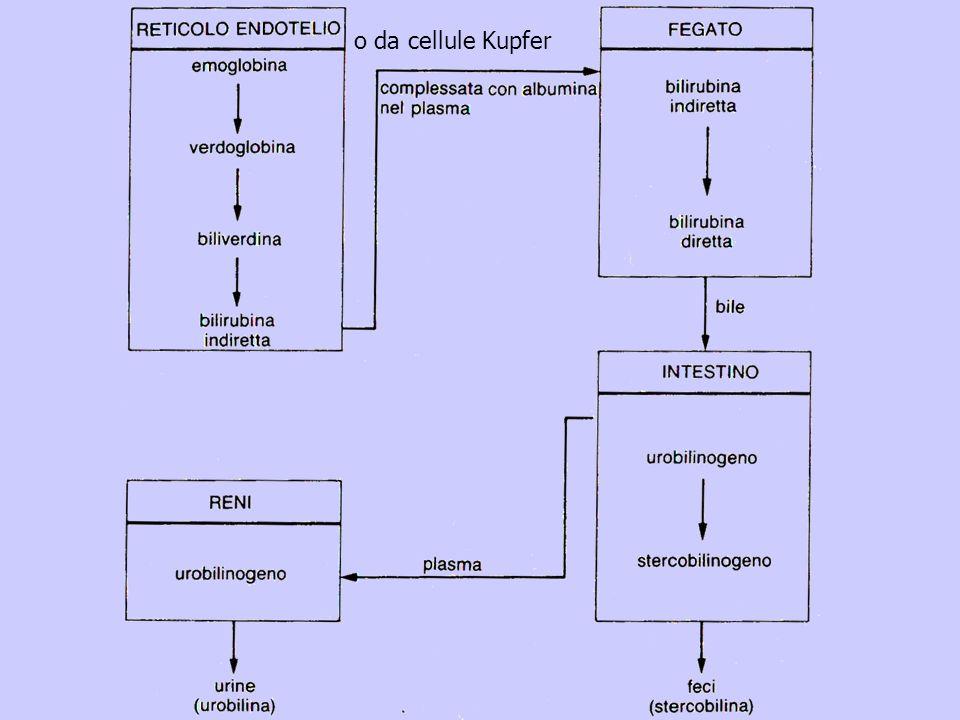 o da cellule Kupfer