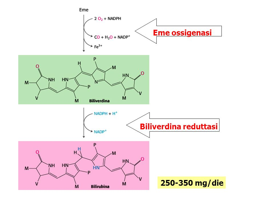 Eme ossigenasi Biliverdina reduttasi Eme biliverdina bilirubina Fe 3+ + CO + NADP + NADPH + 2 O 2 250-350 mg/die