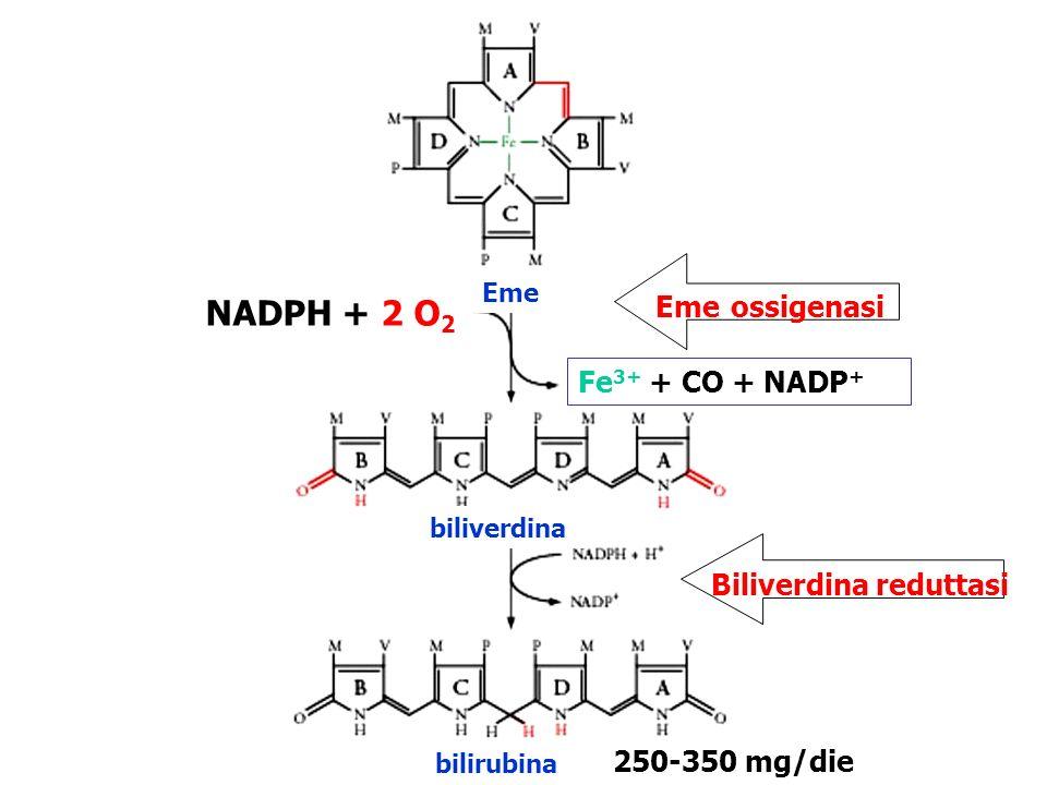 EME OSSIGENASI Biliverdina reduttasi Bilirubina indiretta Sistema microsomiale delleme ossigenasi