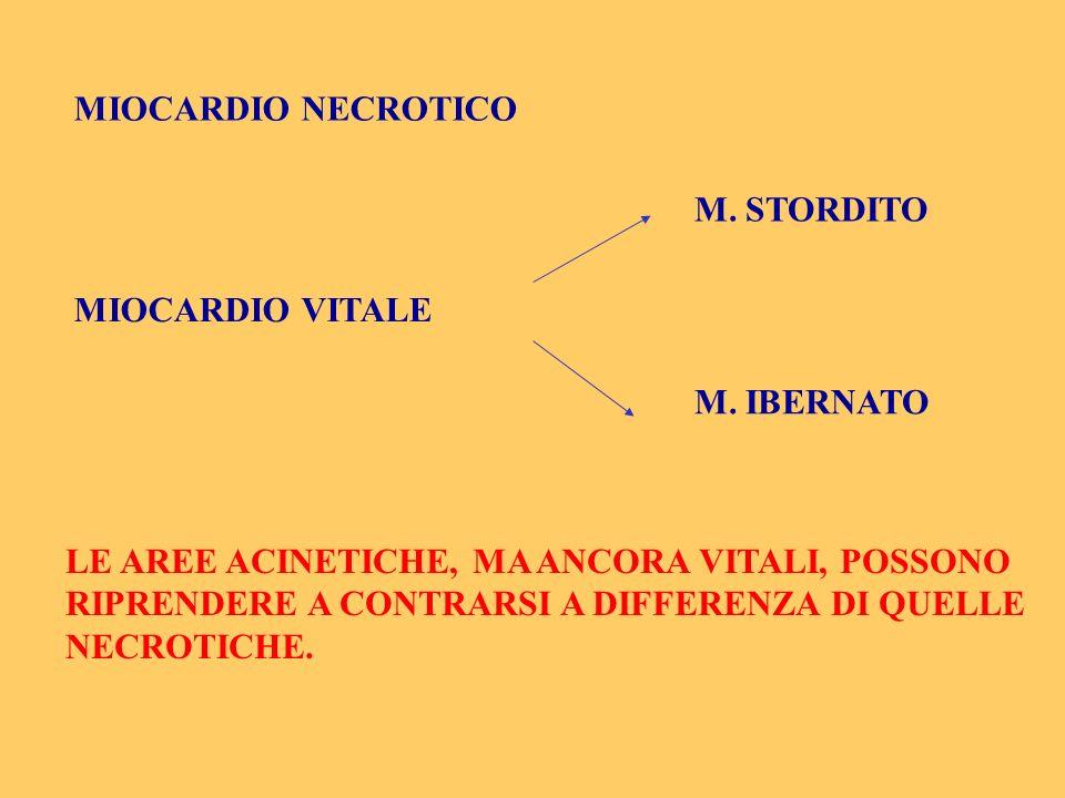 MIOCARDIO NECROTICO MIOCARDIO VITALE M. STORDITO M. IBERNATO LE AREE ACINETICHE, MA ANCORA VITALI, POSSONO RIPRENDERE A CONTRARSI A DIFFERENZA DI QUEL