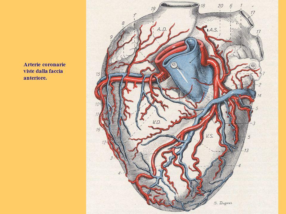 - stratificazione prognostica dei pazienti infartuati in fase acuta e subacuta; - valutazione della vitalità miocardica.