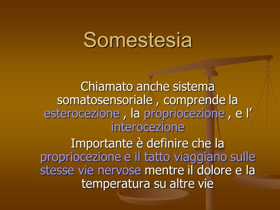 Somestesia Chiamato anche sistema somatosensoriale, comprende la esterocezione, la propriocezione, e l interocezione Importante è definire che la prop