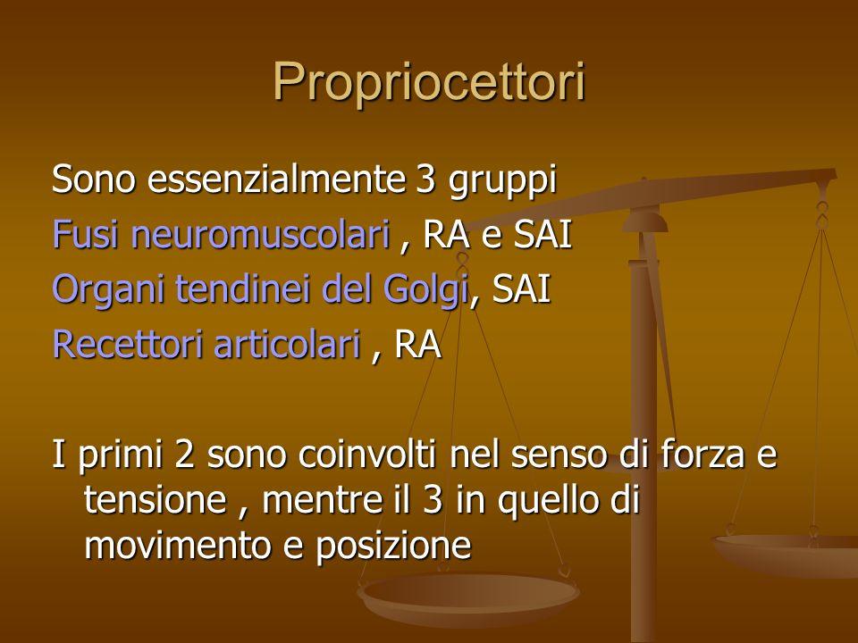 Propriocettori Sono essenzialmente 3 gruppi Fusi neuromuscolari, RA e SAI Organi tendinei del Golgi, SAI Recettori articolari, RA I primi 2 sono coinvolti nel senso di forza e tensione, mentre il 3 in quello di movimento e posizione