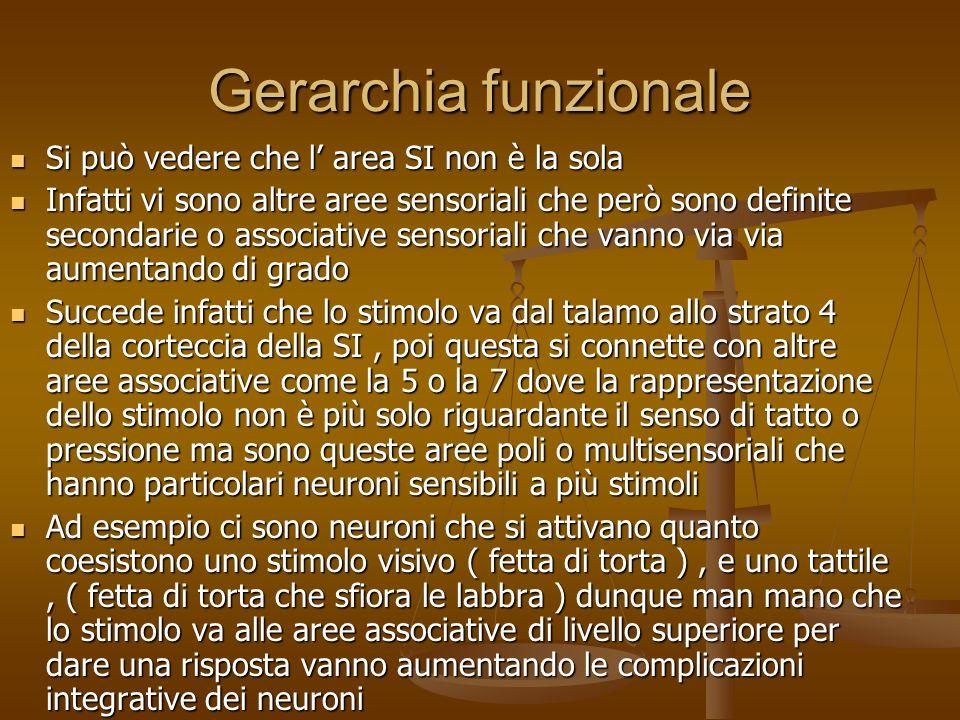 Gerarchia funzionale Si può vedere che l area SI non è la sola Si può vedere che l area SI non è la sola Infatti vi sono altre aree sensoriali che per