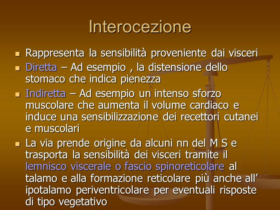 Interocezione Rappresenta la sensibilità proveniente dai visceri Rappresenta la sensibilità proveniente dai visceri Diretta – Ad esempio, la distensio
