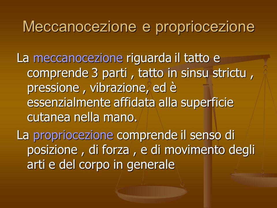 Meccanocezione e propriocezione La meccanocezione riguarda il tatto e comprende 3 parti, tatto in sinsu strictu, pressione, vibrazione, ed è essenzial