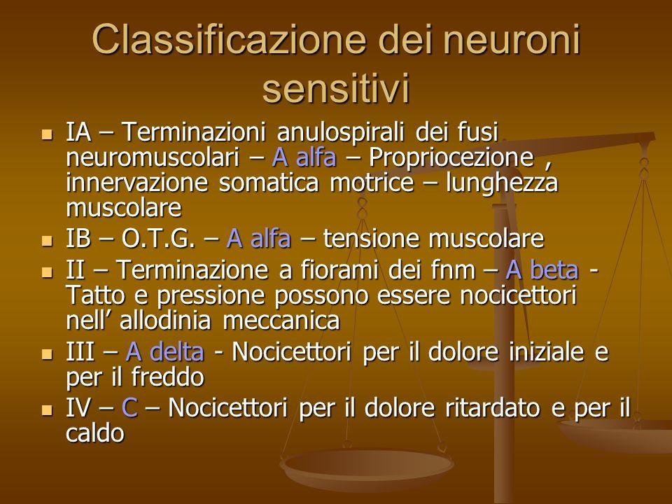 Classificazione dei neuroni sensitivi IA – Terminazioni anulospirali dei fusi neuromuscolari – A alfa – Propriocezione, innervazione somatica motrice