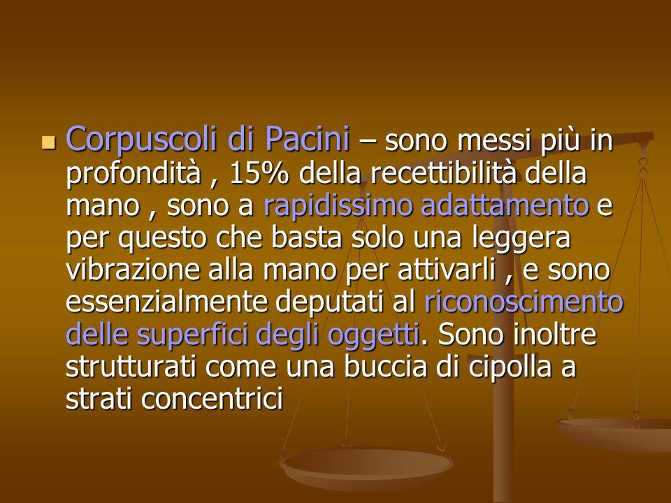 Corpuscoli di Pacini – sono messi più in profondità, 15% della recettibilità della mano, sono a rapidissimo adattamento e per questo che basta solo un