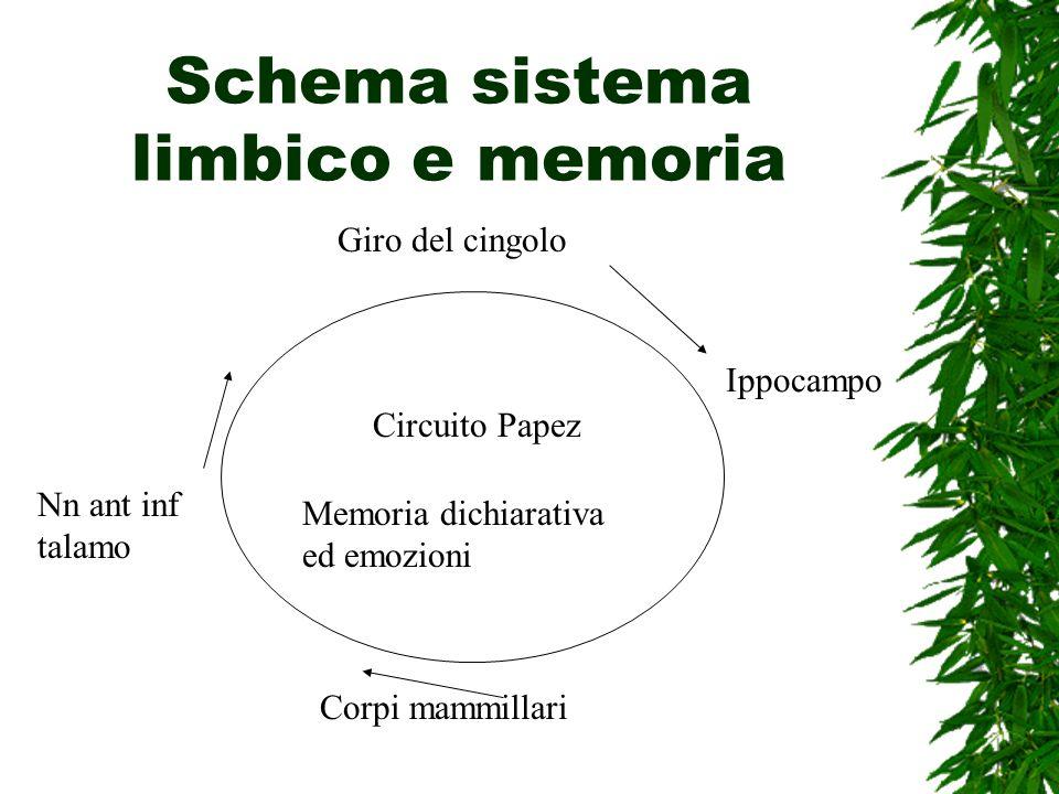 Schema sistema limbico e memoria Giro del cingolo Ippocampo Corpi mammillari Nn ant inf talamo Circuito Papez Memoria dichiarativa ed emozioni