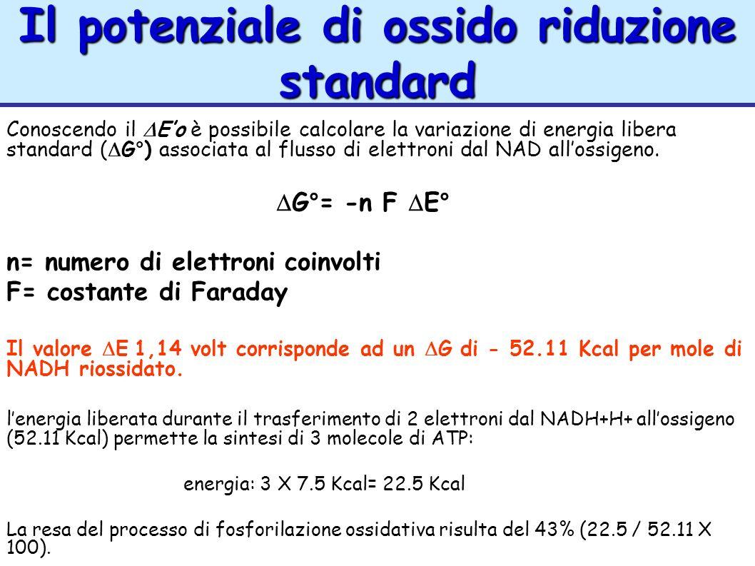 Il potenziale di ossido riduzione standard Conoscendo il Eo è possibile calcolare la variazione di energia libera standard ( G°) associata al flusso d
