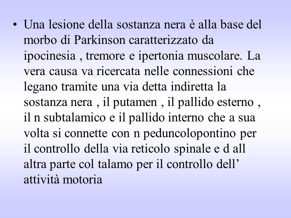 Una lesione della sostanza nera è alla base del morbo di Parkinson caratterizzato da ipocinesia, tremore e ipertonia muscolare. La vera causa va ricer
