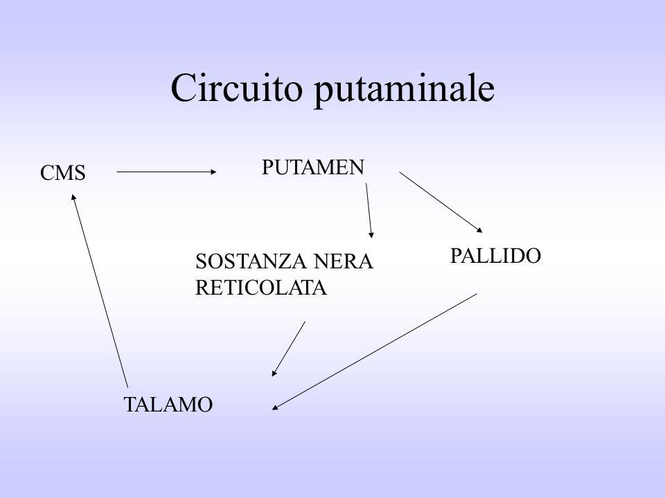 Circuito putaminale CMS PUTAMEN PALLIDO SOSTANZA NERA RETICOLATA TALAMO
