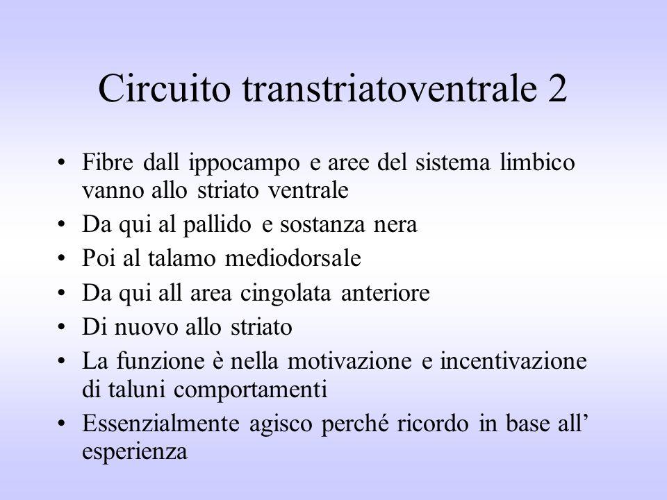 Circuito transtriatoventrale 2 Fibre dall ippocampo e aree del sistema limbico vanno allo striato ventrale Da qui al pallido e sostanza nera Poi al ta