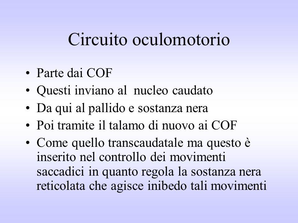 Circuito oculomotorio Parte dai COF Questi inviano al nucleo caudato Da qui al pallido e sostanza nera Poi tramite il talamo di nuovo ai COF Come quel