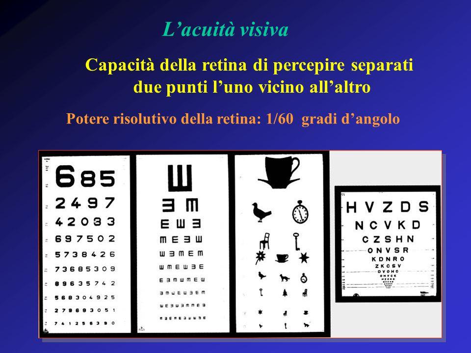 Lacuità visiva Capacità della retina di percepire separati due punti luno vicino allaltro Potere risolutivo della retina: 1/60 gradi dangolo