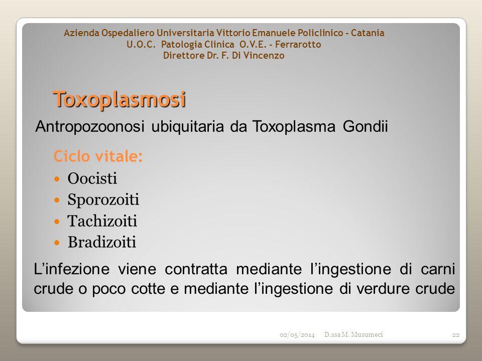02/05/2014D.ssa M. Musumeci22 Toxoplasmosi Ciclo vitale: Oocisti Sporozoiti Tachizoiti Bradizoiti Antropozoonosi ubiquitaria da Toxoplasma Gondii Linf