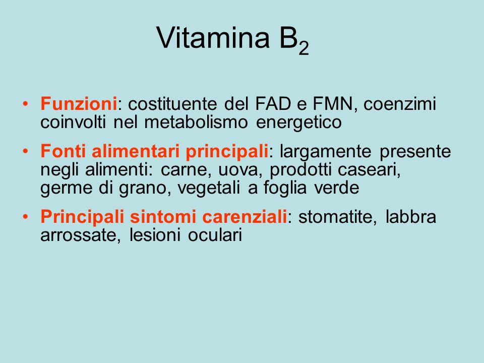 Vitamina B 2 Funzioni: costituente del FAD e FMN, coenzimi coinvolti nel metabolismo energetico Fonti alimentari principali: largamente presente negli alimenti: carne, uova, prodotti caseari, germe di grano, vegetali a foglia verde Principali sintomi carenziali: stomatite, labbra arrossate, lesioni oculari