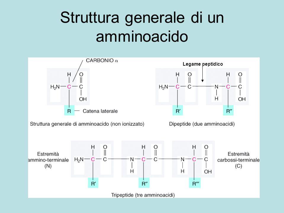 Struttura generale di un amminoacido Legame peptidico