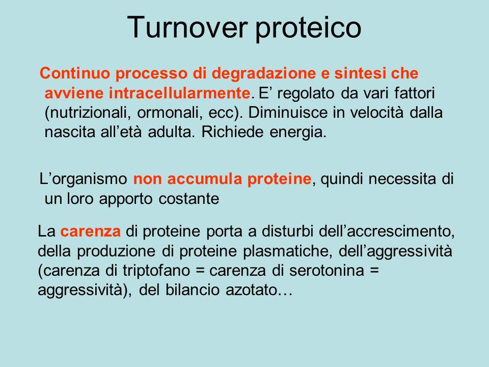 Turnover proteico Continuo processo di degradazione e sintesi che avviene intracellularmente.