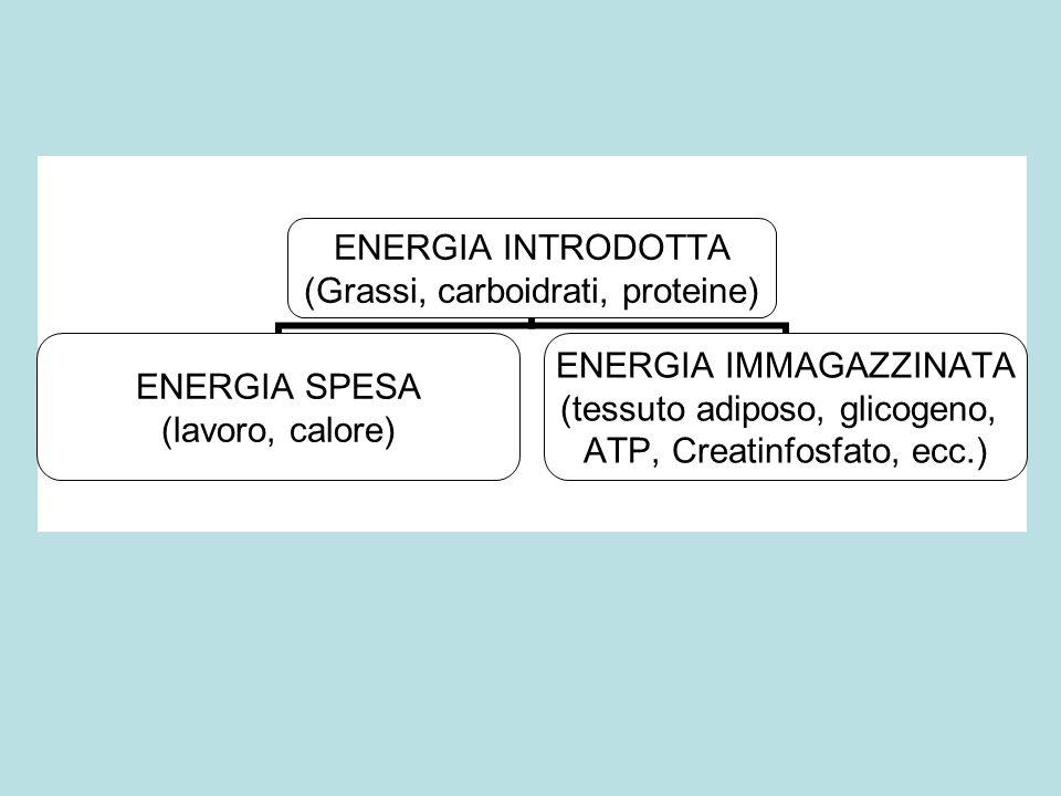 Spesa energetica di base (Metabolismo basale)