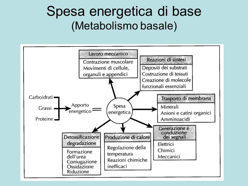 Utilizzo delle proteine Dipende da numerosi fattori: Grado di digeribilità Fattori che ne favoriscono lutilizzazione (Vitamine del complesso B, minerali,…) Fattori che ne limitano lutilizzazione (tannini…)