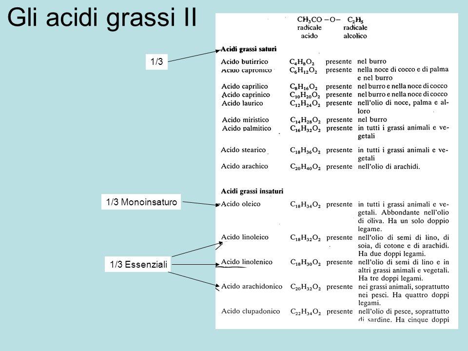 Gli acidi grassi II 1/3 Monoinsaturo 1/3 Essenziali 1/3