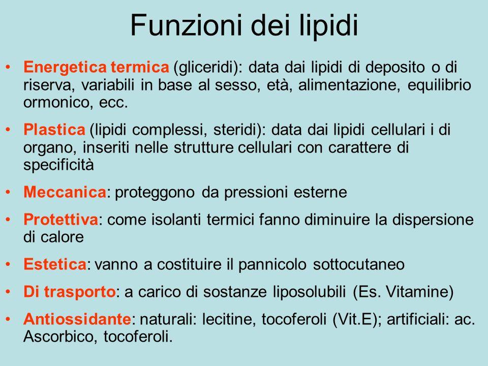 Funzioni dei lipidi Energetica termica (gliceridi): data dai lipidi di deposito o di riserva, variabili in base al sesso, età, alimentazione, equilibrio ormonico, ecc.