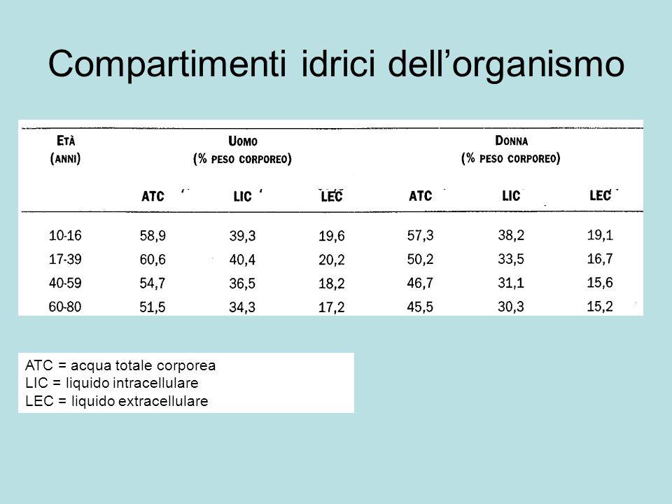 Compartimenti idrici dellorganismo ATC = acqua totale corporea LIC = liquido intracellulare LEC = liquido extracellulare